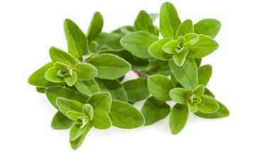 merjoram-herb